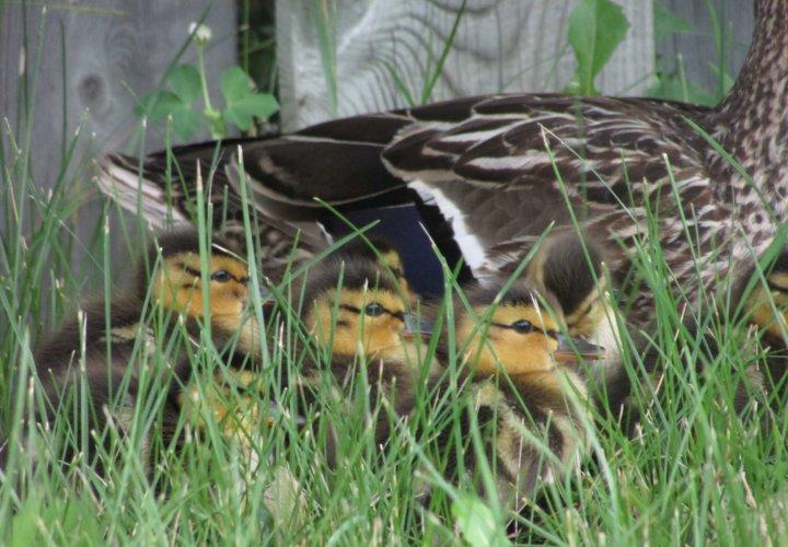 Enten und Errettung